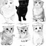 วันว่างของทาสแมว 2