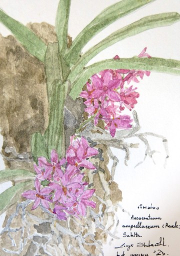 floweronpostcard-1-6