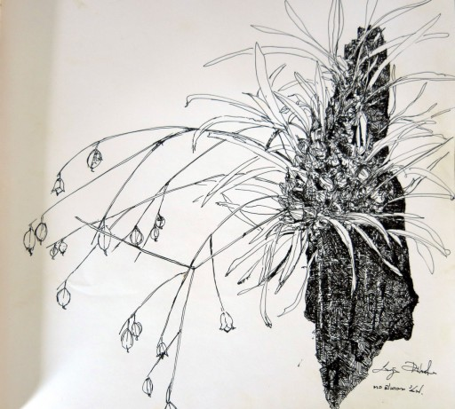 floweronpostcard-2-2