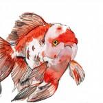 ตู้ปลาทอง