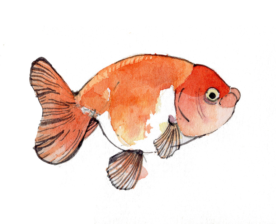 goldfish-2
