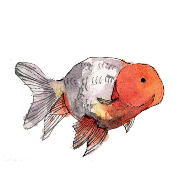 goldfish-4